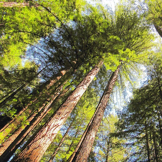 Make sure to stop by Armstrong Redwoods, where some of the majestic trees are more than 1,400 years old!