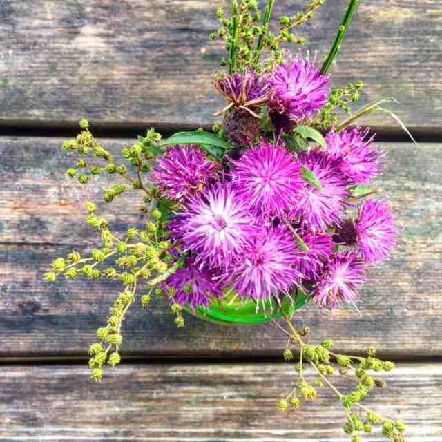 Pick some Scottish Thistle (just leave it in the park and don't take it home with you). The thistle may only be a humble weed, but it is the emblem of the Scottish nation.