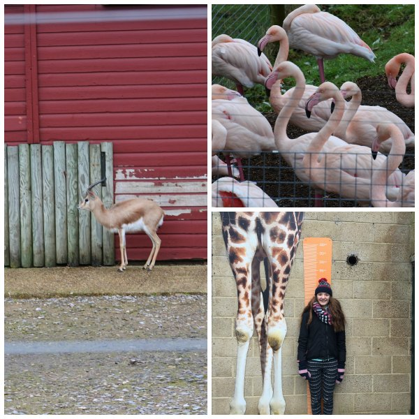 marwel zoo Collage 1
