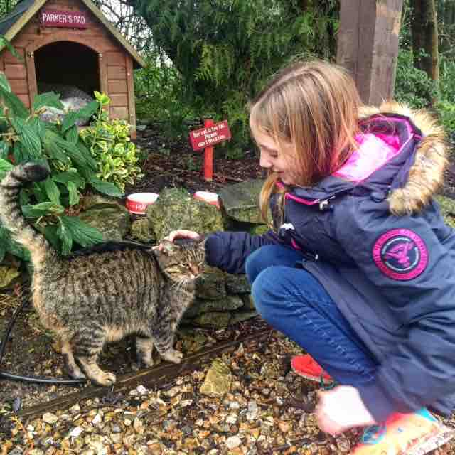 Making friends with Parker the cat at the Old Swann and Minster Mill