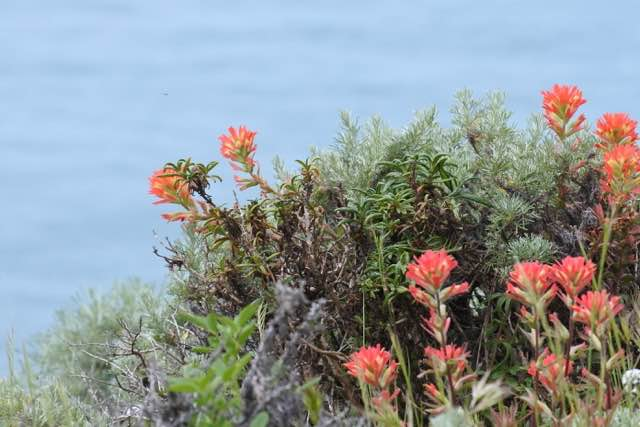 The trail has pockets of wild flowers dotted across the cliffs. It's truly stunning.