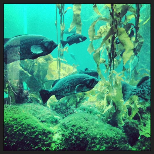 Monterey Bay Aquarium - Kelp Forest