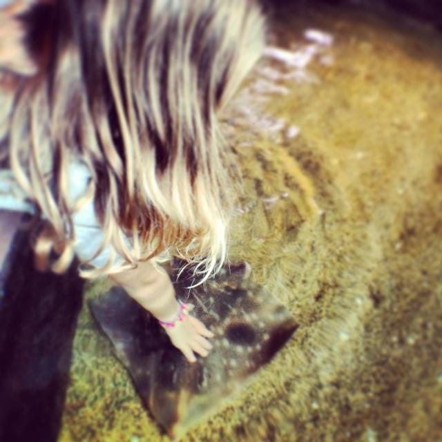 Monterey Bay Aquarium - touching a Bat Ray