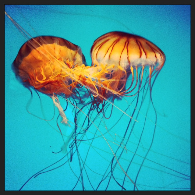 Monterey Bay Aquarium - Jellies