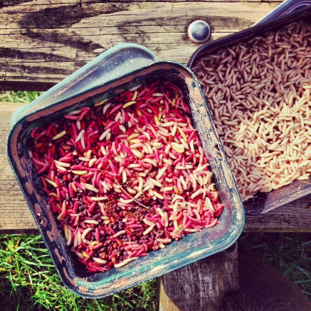 You want me to what? These red and white maggots were used as bait to attract our fish.