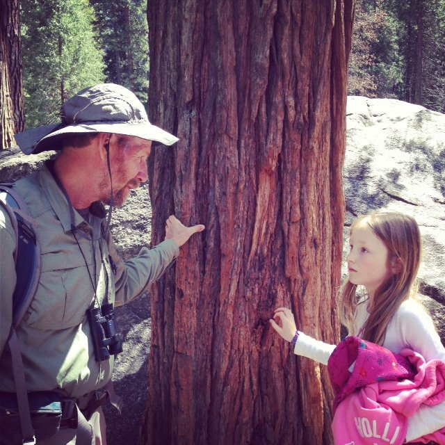Michael point out the soft bark of the Giant Sequoia trees.