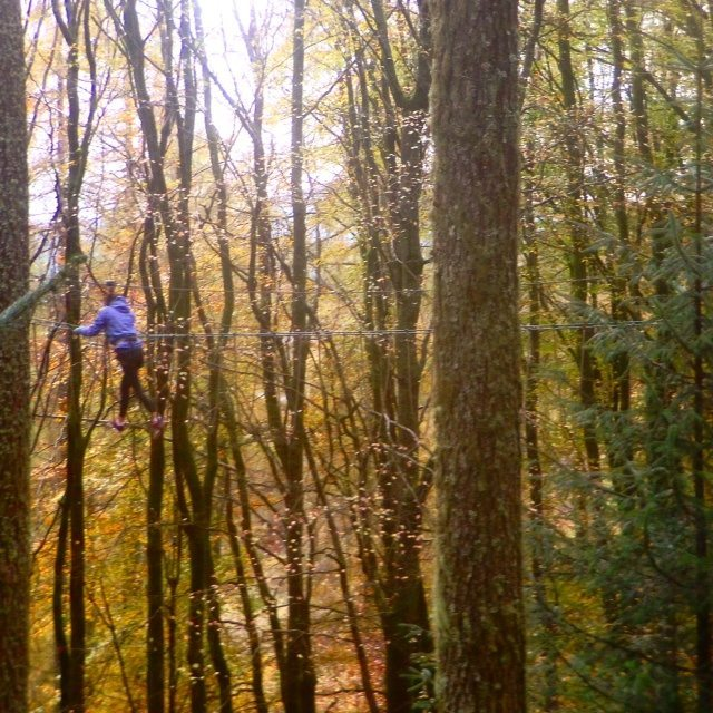 Go Ape in Aberfoyle is just a 10-minute ride from Forest Hills. Adults and children from aged 10 can swing amongst the trees in this high ropes/zip line heaven!