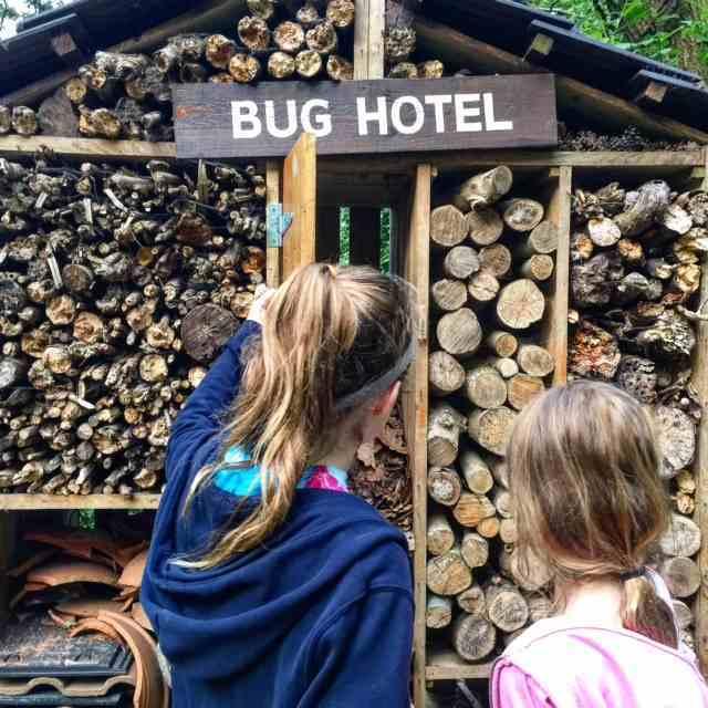 forest holiday blackwood forest bug hotel