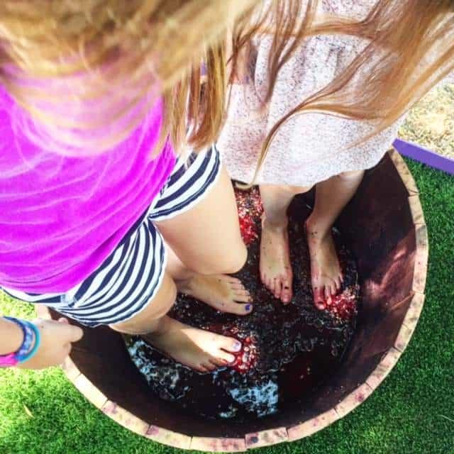 Napa - crushing grapes at sterling!