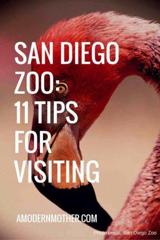 San Diego Zoo - Pinterest
