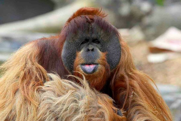 If you are planning a trip to Souther California, you MUST visit the world famous San Diego Zoo.