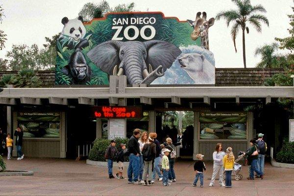 Photo credit: San Diego Zoo