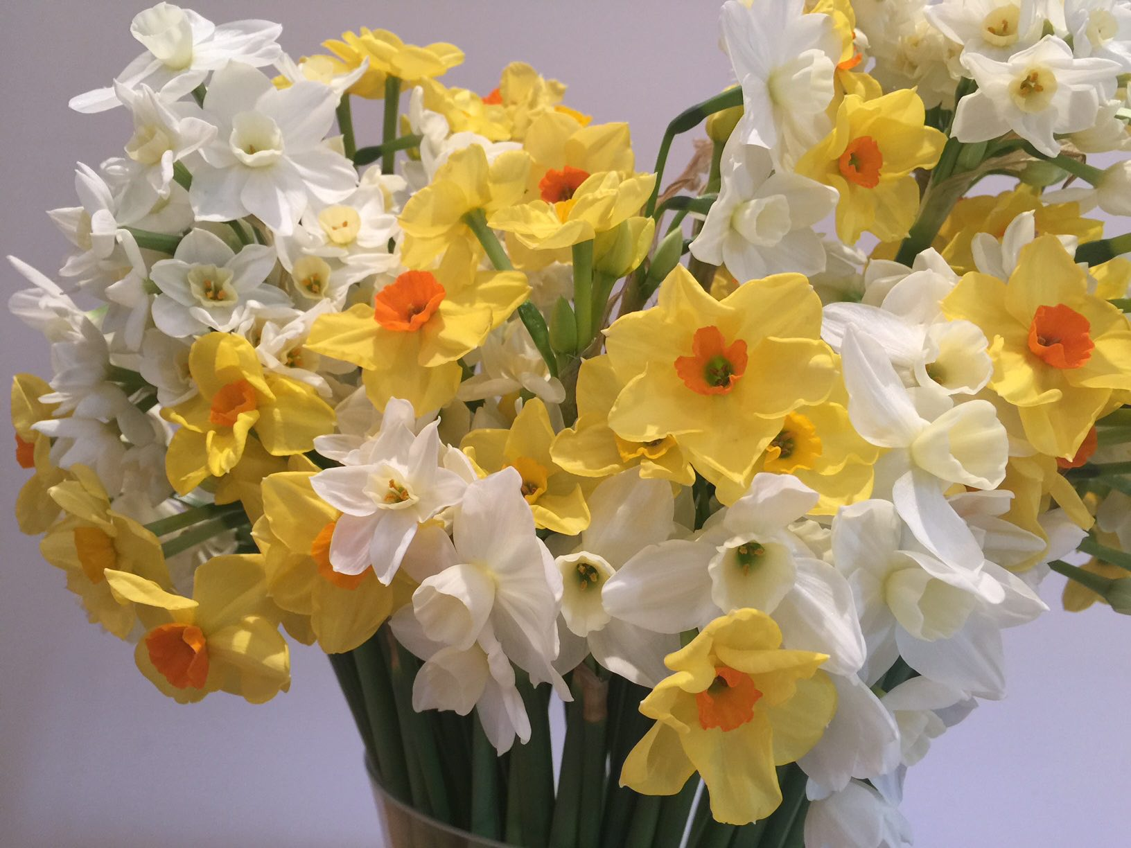 Here's a pic of my favourites flowers from Scented Narcissi taken on iPhone 6 Plus.