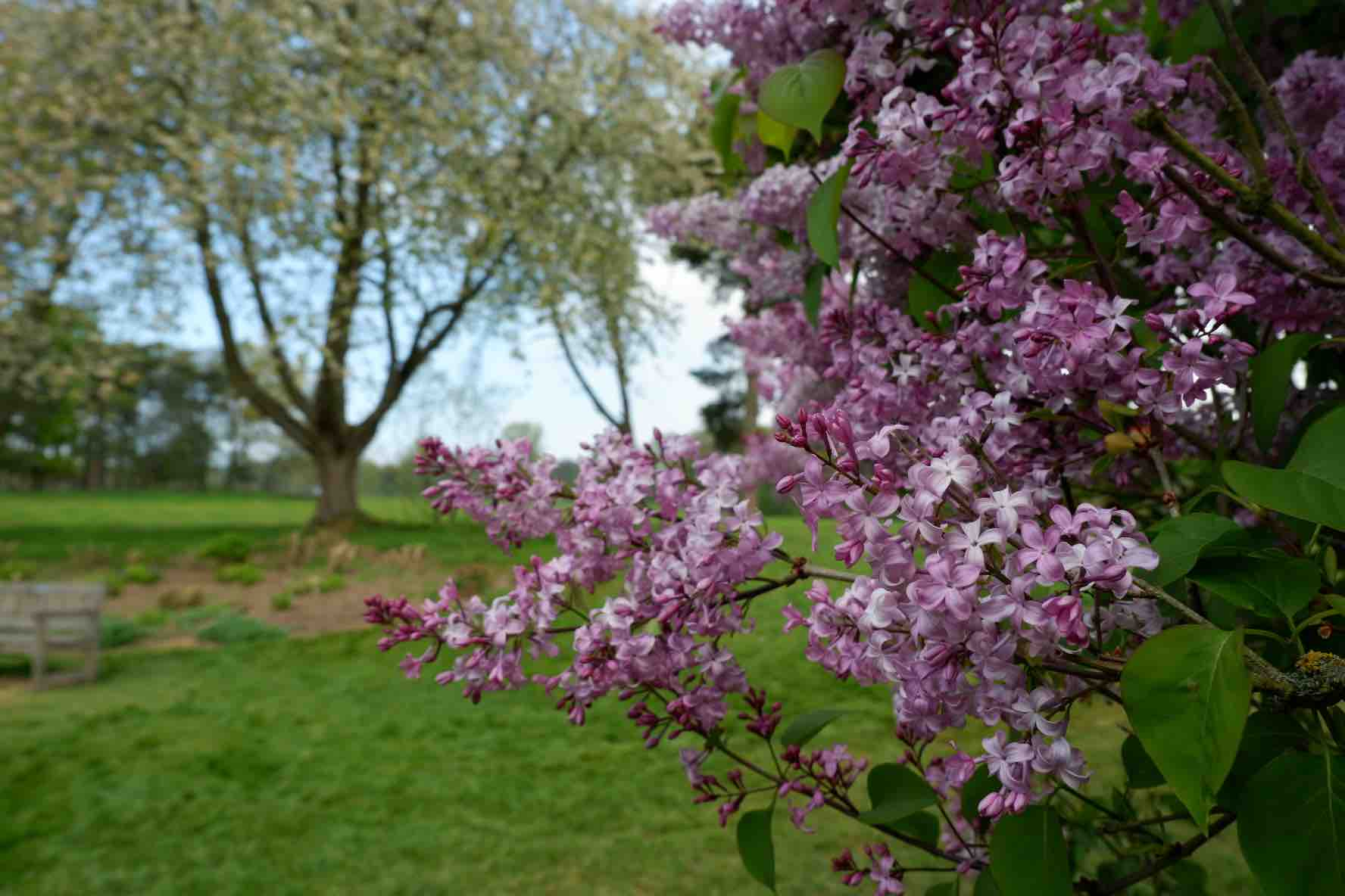 We also saw some lovely lilac